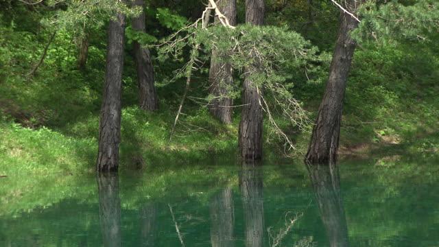grüner see / green lake (styria - austria) - オーストリア点の映像素材/bロール