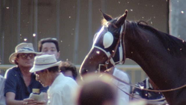 a groom leads a racehorse through a crowd of spectators. - 競走馬点の映像素材/bロール