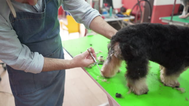 a groomed puppy is a happy puppy - working animal stock videos & royalty-free footage