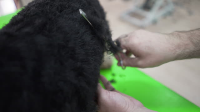 groomer styling a dog's fur - working animal stock videos & royalty-free footage