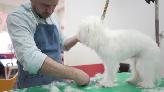 grooming time - working animal stock videos & royalty-free footage