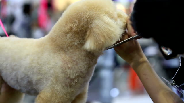 grooming - pampered pets stock videos and b-roll footage