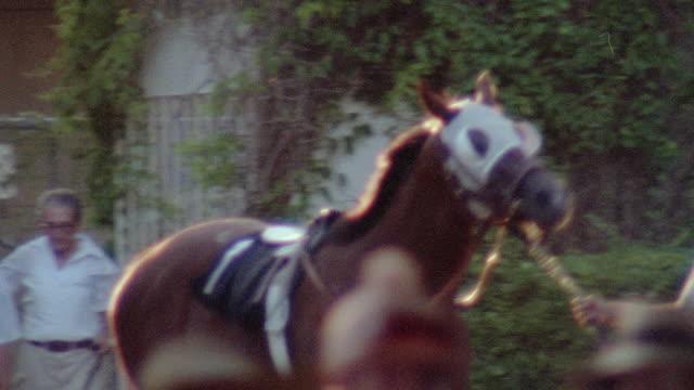 grooms lead racehorses past spectators - kleine gruppe von tieren stock-videos und b-roll-filmmaterial