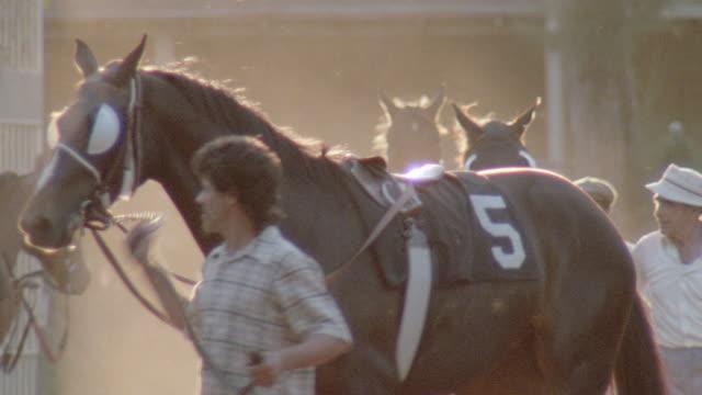 grooms lead racehorses. - 競走馬点の映像素材/bロール