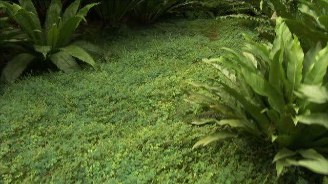 ground cover thrives between tropical plants. - saftig bildbanksvideor och videomaterial från bakom kulisserna