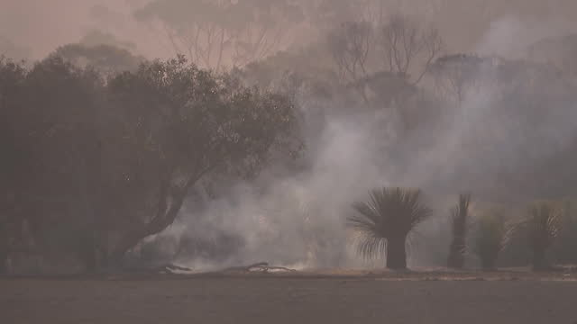 ground level establishing shot of smoke rising from brush fires in australia. - environment or natural disaster or climate change or earthquake or hurricane or extreme weather or oil spill or volcano or tornado or flooding stock videos & royalty-free footage