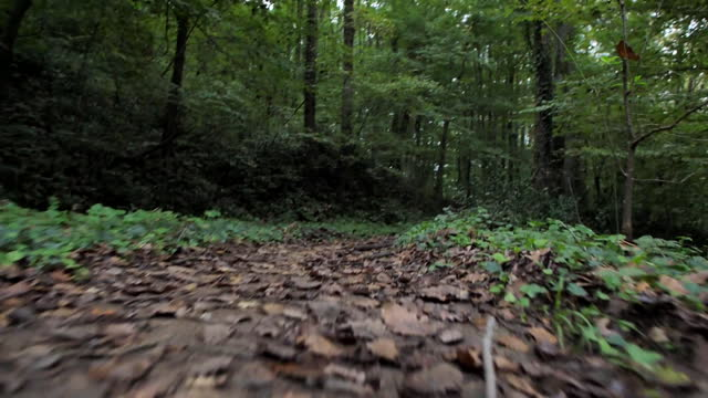 ground level pov shot from a person walking through belgrad forest in istanbul turkey on october 18 2018 - surface level stock videos & royalty-free footage