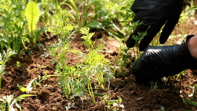ground preparation - gardening glove stock videos & royalty-free footage