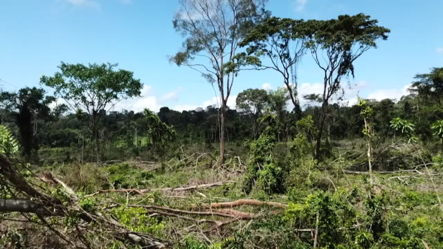 ground shot and aerial to show evidence of deforestation in the amazon rainforest brazil - zerstörung stock-videos und b-roll-filmmaterial