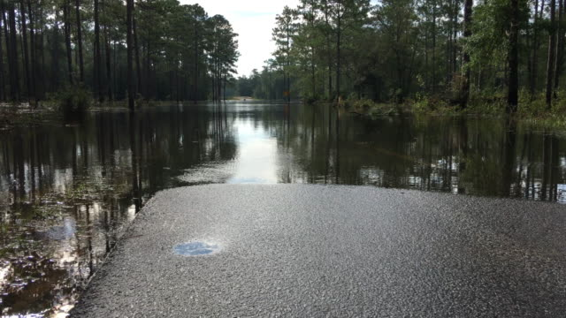 ground-level shot of flooded road with water moving through forest and over road near bridge - florida us state stock videos & royalty-free footage