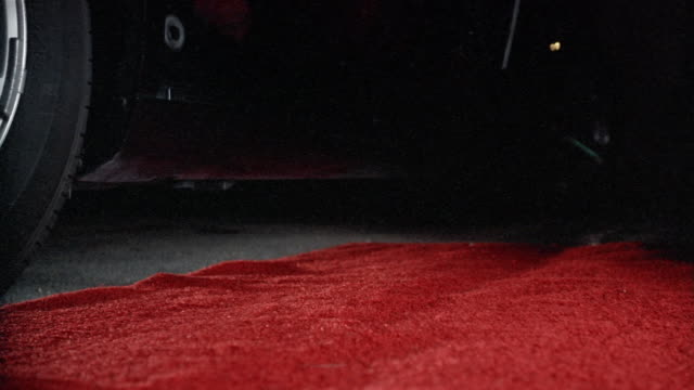 ground-level view of red carpet / small dog jumping out of limo and running down carpet as camera flashes go off - gala stock-videos und b-roll-filmmaterial