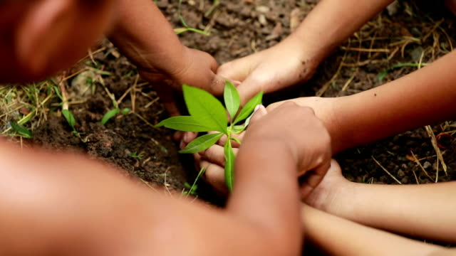 group boys planting a new tree, slow motion - protection stock videos & royalty-free footage
