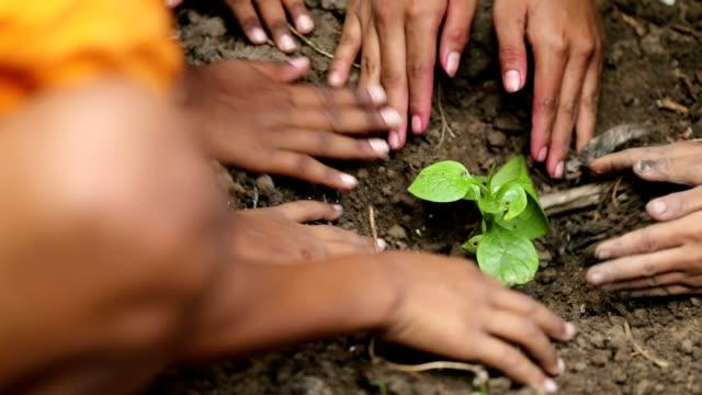 スローモーションの新しい木を植える少年グループ - 植える点の映像素材/bロール