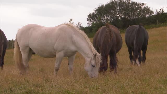 a group horse eating on field - medium group of animals点の映像素材/bロール