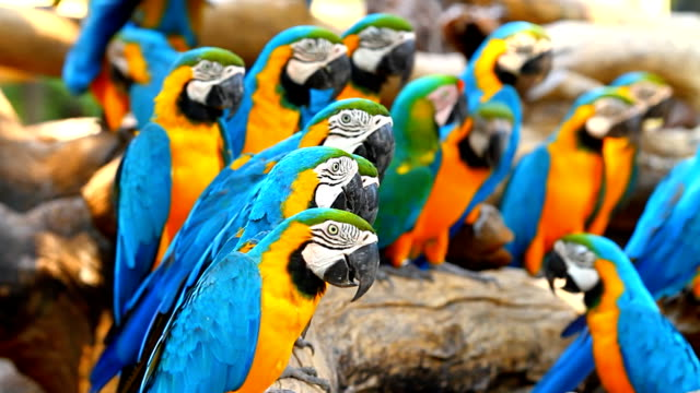 Group macaw parrots