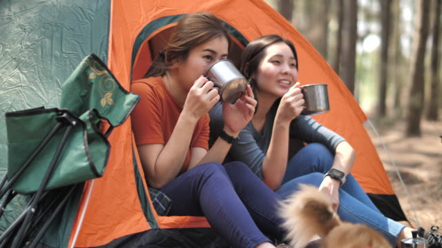 group of a young asian woman camping pitch a tent - picnic stock videos & royalty-free footage