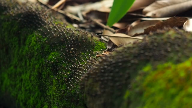 group of ants in the forest - ant stock videos & royalty-free footage