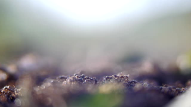group of ants - foraging stock videos & royalty-free footage