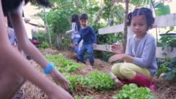 Group of Asian children enjoy planting fresh organic lettuce vegetable in gardens farm, Learning environment and education concept