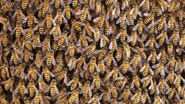 ミツバチの群れ ミツバチの巣の蜜蜂に取り組む - 虫の群れ点の映像素材/bロール