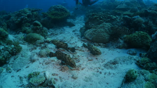 group of big marbled grouper fish - oceania stock videos & royalty-free footage