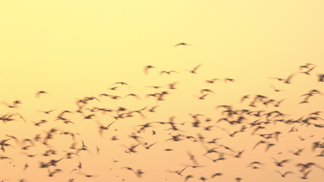 Group of bird flying on yellow sky