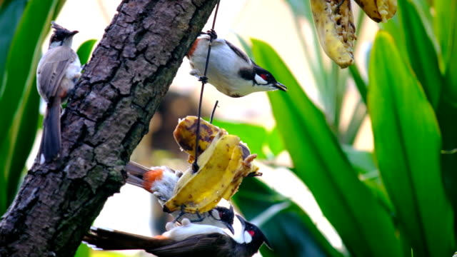 gruppe der vogel in der natur essen obst - tierkörper stock-videos und b-roll-filmmaterial