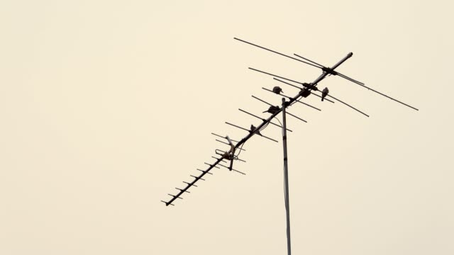 group of bird on a household antenna in the dusk time - antenna parte del corpo animale video stock e b–roll
