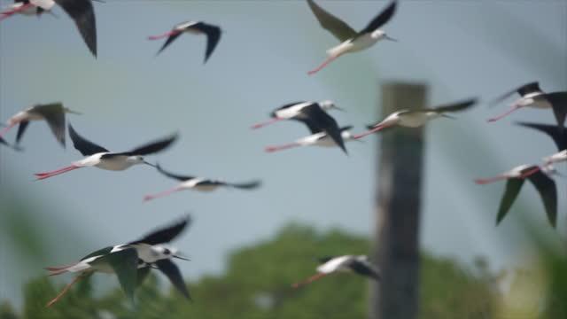 vídeos y material grabado en eventos de stock de un grupo de pájaros de pie en el estanque a cámara lenta - área silvestre