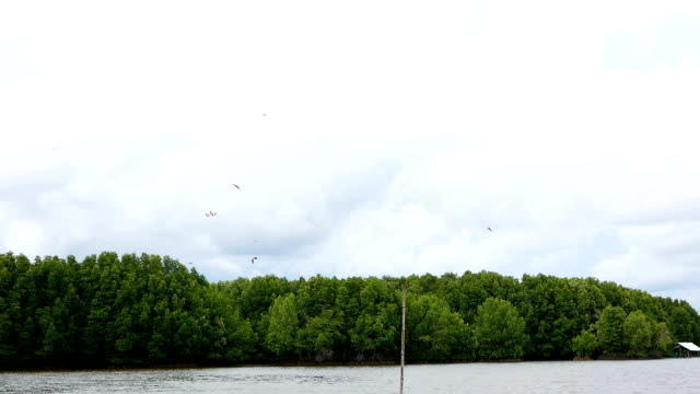 group of birds flying on sky over river - colomba video stock e b–roll