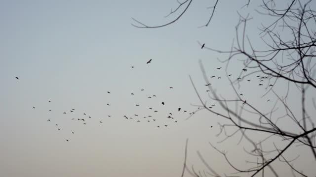 vídeos de stock, filmes e b-roll de grupo de pássaros voando sobre as árvores - low angle view