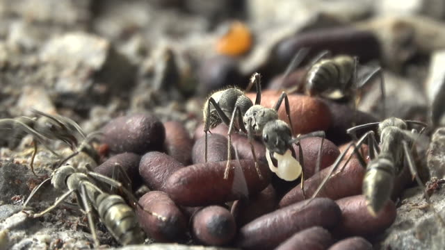 group of black ant - animal family stock videos & royalty-free footage