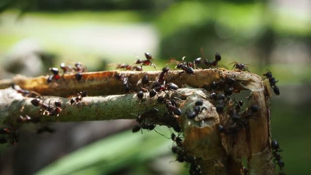grupp av svarta myror på blad - djurbeteende bildbanksvideor och videomaterial från bakom kulisserna