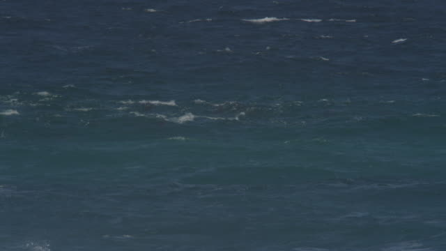 WS group of Bottlenosed Dolphins playing in surf directlty towards camera