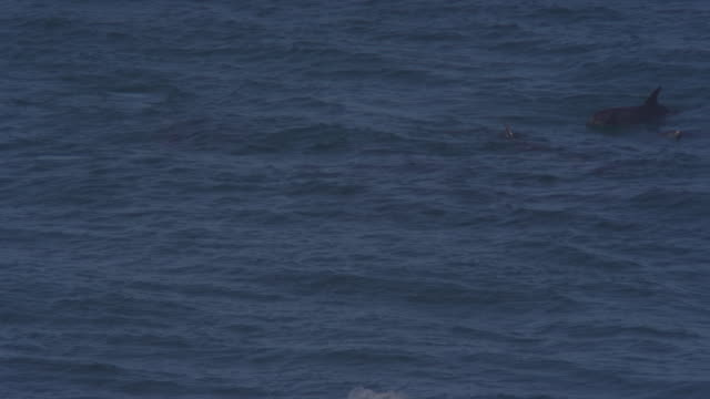 Group of Bottlenosed Dolphins with calf swimming through waves and visible underwater