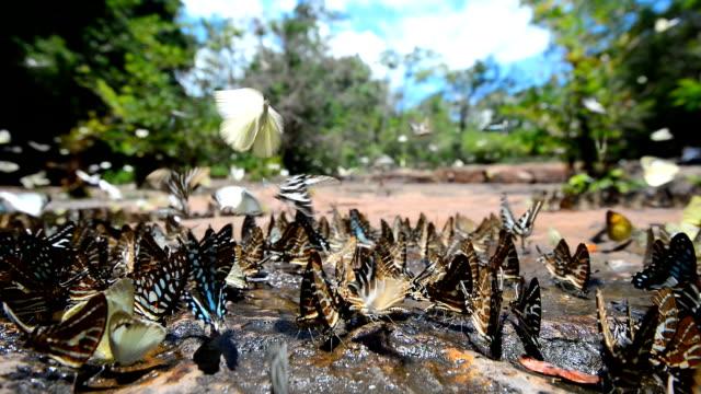 Gruppe von Schmetterling Fedding auf Boden