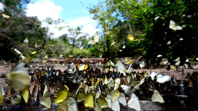 vídeos de stock, filmes e b-roll de grupo de borboleta fedding no chão - grupo de animais