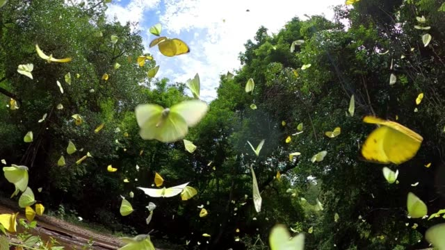 group of butterfly flying slow motion - nature stock videos & royalty-free footage