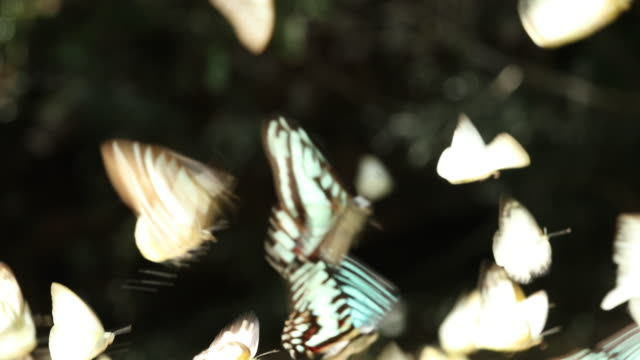 group of butterfly - butterfly stock videos & royalty-free footage