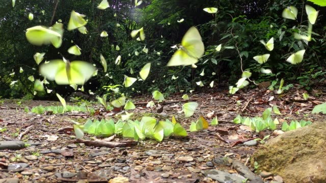 group of butterflys flying - branch stock videos & royalty-free footage