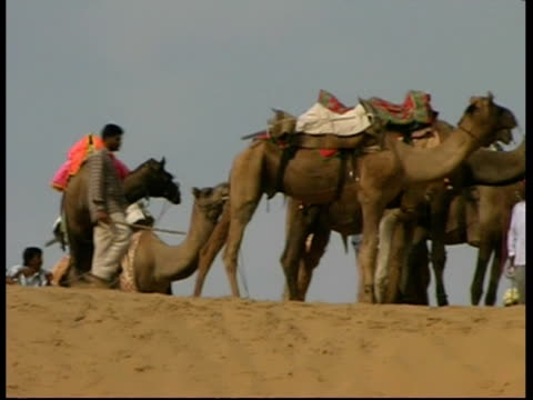 stockvideo's en b-roll-footage met ms group of camels and men on a sand dune, rajasthan, india - hoofdtooi