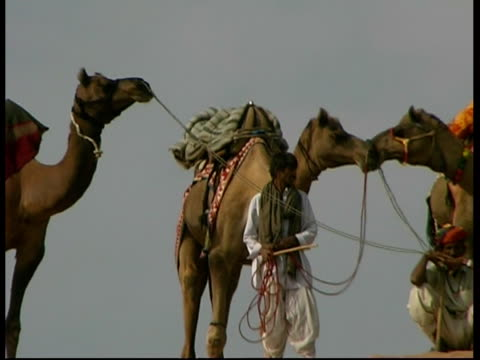 ms group of camels and men on a sand dune, rajasthan, india - gemeinsam gehen stock-videos und b-roll-filmmaterial