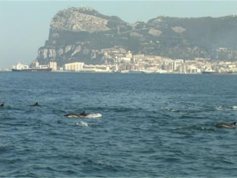 vídeos de stock e filmes b-roll de group of common dolphins in gibraltar bay - cultura mediterrânica