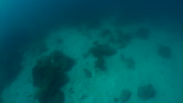 ガラパゴス諸島の海底サンゴ礁でのクロガネウシバナトビエイレイ水泳群 - トビエイ点の映像素材/bロール