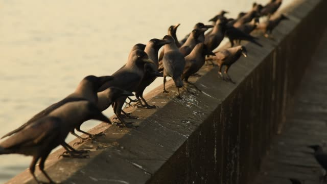 Group of Crows on wall