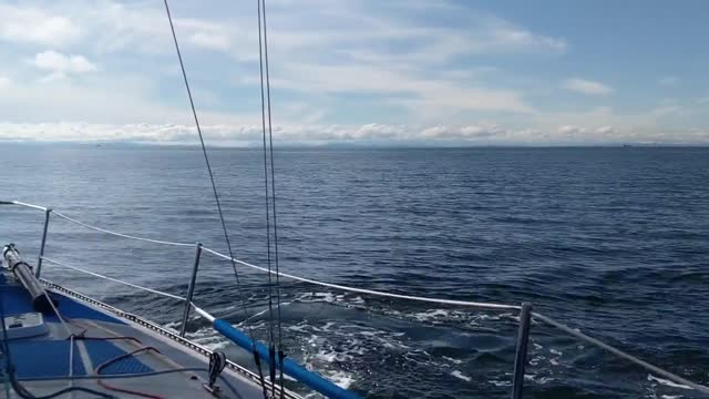 stockvideo's en b-roll-footage met group of dall's porpoises surrounded alex millar's sailboat while he was on his way to bowen island from the university of british columbia, as this... - https