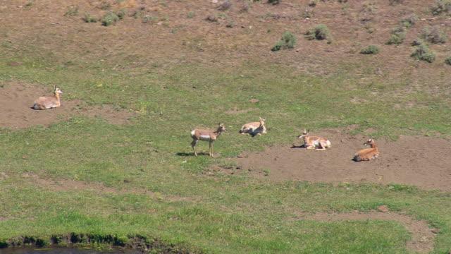 vídeos y material grabado en eventos de stock de cu aerial ts group of deers near small river / wyoming, united states - grupo pequeño de animales
