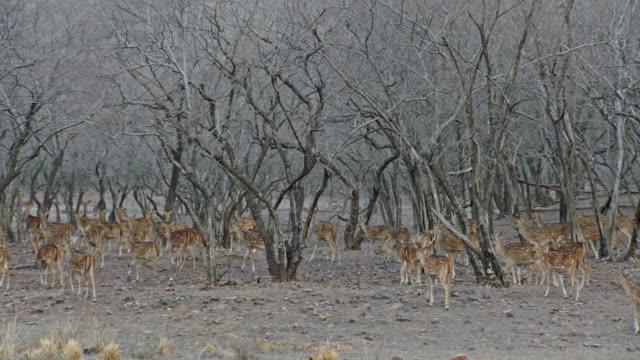 group of deers roaming at woodland - växtätare bildbanksvideor och videomaterial från bakom kulisserna