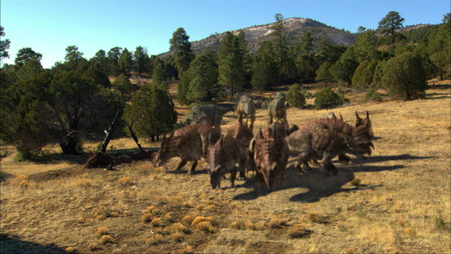 cgi, ms, td, group of dinosaurs in field - eoraptor stock videos and b-roll footage