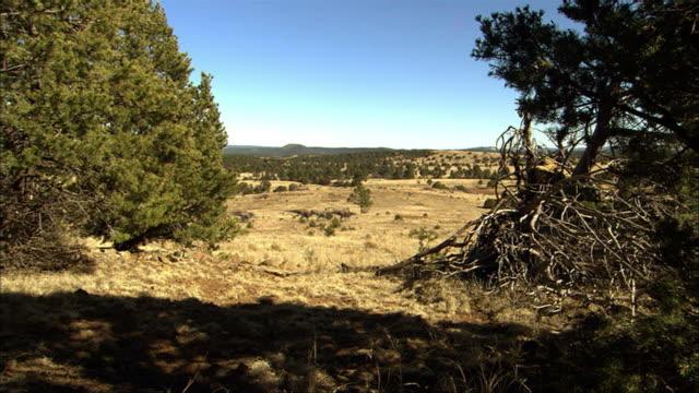 cgi, ws, group of dinosaurs walking in field - eoraptor stock videos and b-roll footage